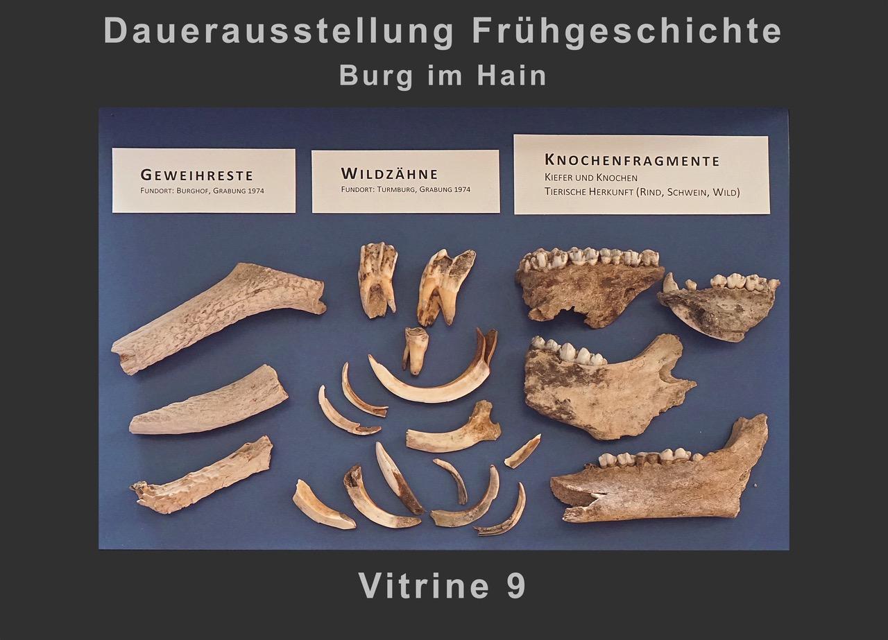 Vitrine 9: Knochen, Wildzähne